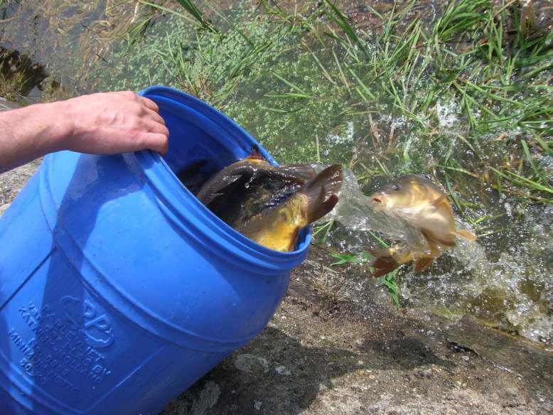 Goldfische im teich great hilfe im teich with goldfische for Karpfen im gartenteich